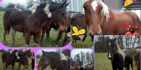 Nouveaux chevaux à l'écurie